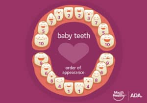 what age and order do baby teeth come in